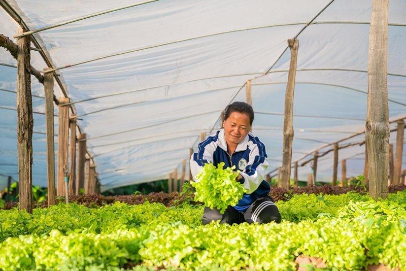 Toxin-Free Vegetables - Phu Thap Boek, Phetchabun